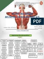 mapa conceitual fisiologia