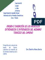 ORIGEN E INSERCIÓN DE LOS MÚSCULOS EXTRÍNSECOS E INTRÍNSECOS DEL MIEMBRO TORÁCICO DEL CAPRINO
