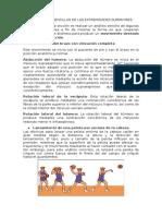 Actividades Sencillas de Las Extremidades Superiores (Parte Completa)