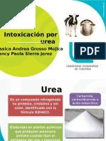 Intoxicacion Por Urea