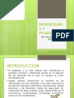 MORDEDURAS Y PICADURAS.pptx