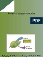 Fisiologia Vegetal- Respiración celular.
