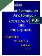 2 b AnatomiaTE