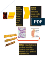 EmbrioClase1