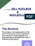 Nukleus Dan Nukleolus