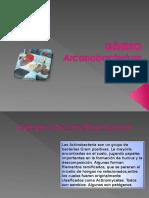 Clase Arcanobacterium
