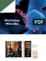 Morfologi Mikroba