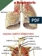 aparato-respiratorio.ppt