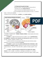 Docslide.com.Br Sistema Nervoso Atividades 5o Ano