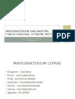 Mikrobakterium Dan Anatomi, Fungsi Sensorik, Otonomi