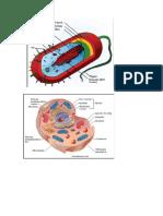 Imagenes Celulas