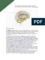 Funciones y Cerebro Triuno