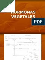Hormonas Auxinas