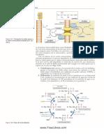 Metabolismo de Los Lipidos Parte 2