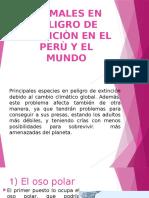 Grupo 3 Animales en Peligro de Extinciòn en El Perù