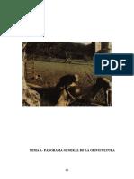 Historia de La Olivicultura