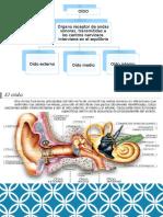 Anatomia Moya