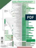 poster klasifikasi filogeni llumut