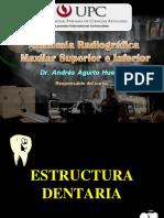 Anatomia Radiografica NORMAL Intraorales y Extraorales