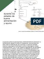Efectores Alostéricos Positivos y Negativos Regulan Enzimas Clave