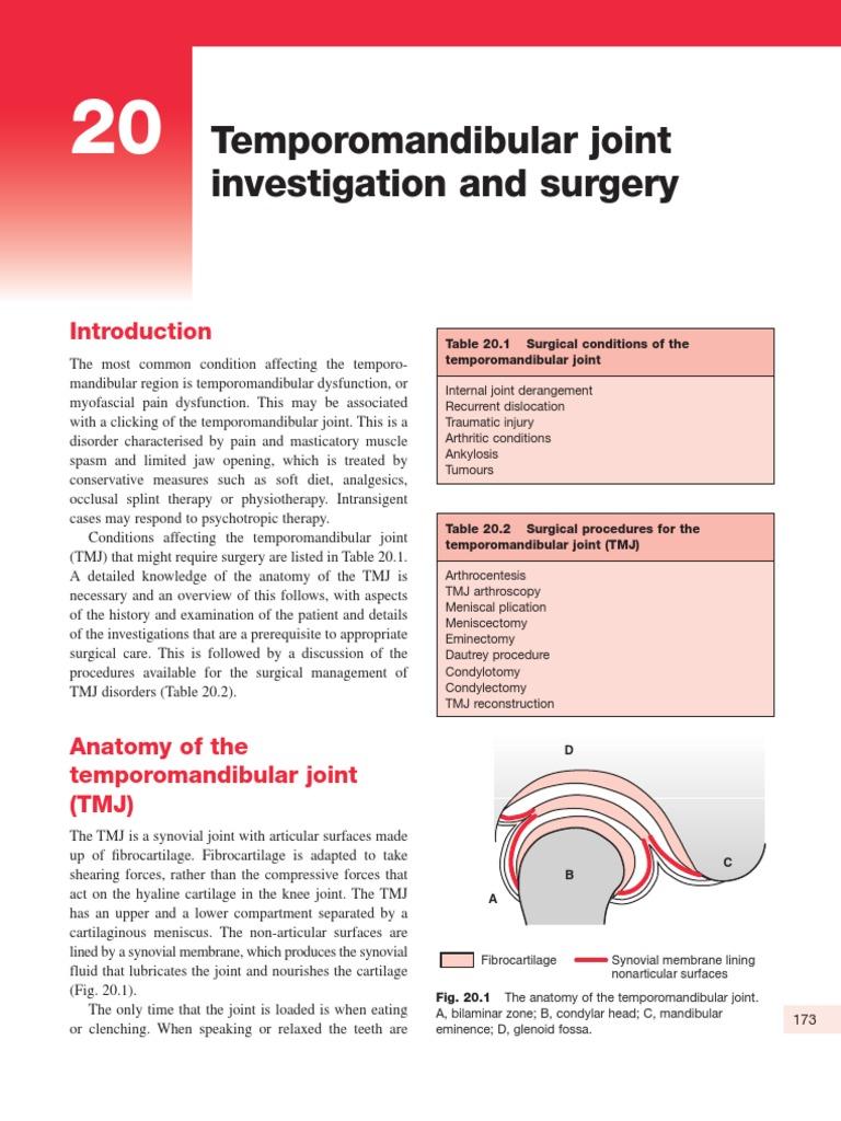 Temporomandibular Joint Anatomy Ppt Image collections - human body ...