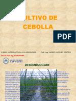 Cultivo de Cebolla