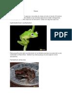 Ranas, las 10 ranas más curiosas del mundo.