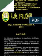 La Flor Morfologia