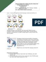 fase-fase perkembangan embrio