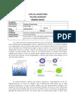 Guía Laboratorio Primero Medio Enlaces Químicos
