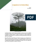 Ceiba, árbol sagrado de los mayas
