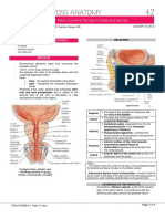 Pelvic Contents Peculiar to Males and Females - Wong.pdf