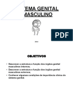 Sistema Genital Masculino 2014