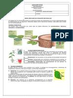 Guia Grado 7 Biologia Tejidos Vegetales