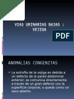 Aparato Genital Masculino y Femenino - Mamas (1)