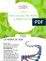 Estructura Del ADN y Replicación