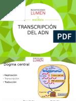 Transcripcion y Traduccion