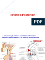 03 Hip of is is Posterior