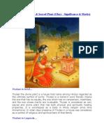 Thulasi the Divine
