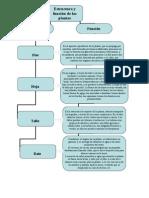 7451819 Estructura y Funcion de Las Plantas