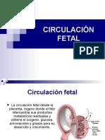 Circulacion Fetal Placenta