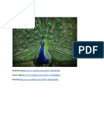 feathers docx