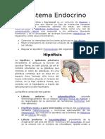 Anatomía Sistema Endocrino