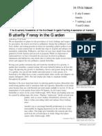 Organic Gardening - Butterfly Frenzy in the Garden