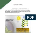 Fertilizacion Foliar en Vides