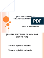 Ţesutul Epitelial Glandular (Secretor)