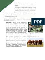 Actividades Economicas en Guatemala