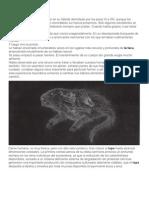 32-38 Topo Idiota Megatherium Manejo Ambiental