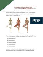 La Anatomia