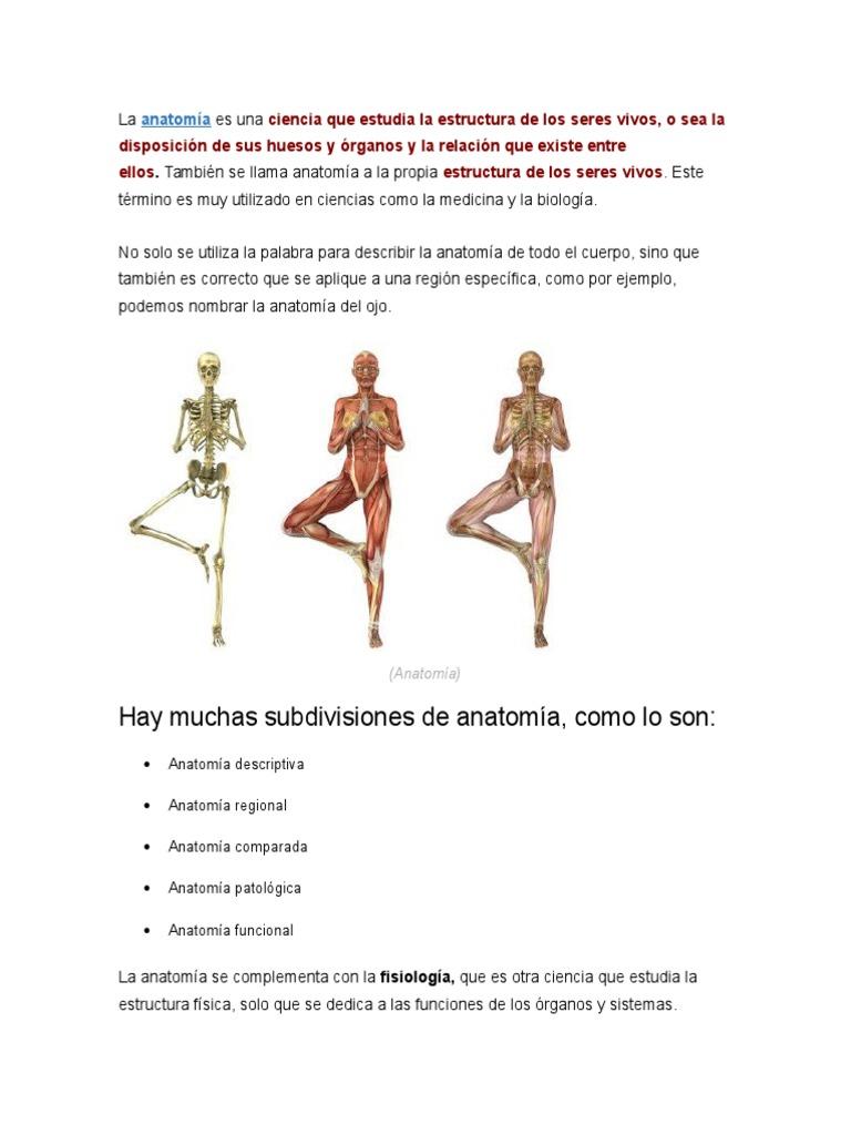 Moderno Definición Anatomía Comparada Viñeta - Anatomía de Las ...